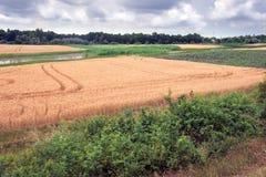 生物多样性,考虑到土壤类型的各种各样的庄稼 免版税库存照片