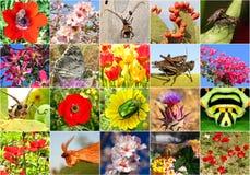 生物多样性 免版税库存照片