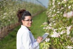 生物学家在开花的果树园 免版税库存照片