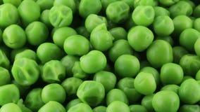 生物新颖的豌豆 影视素材