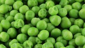 生物新颖的豌豆 股票录像