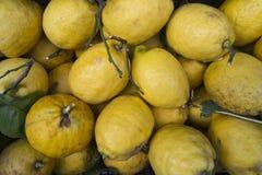 生物柠檬 库存照片