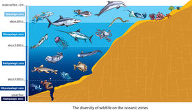 生物深海 库存照片
