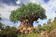 生物演化谱系图解在迪斯尼动物界主题乐园,奥兰多,佛罗里达 免版税库存图片