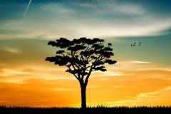 生物演化谱系图解在日落的 免版税库存照片