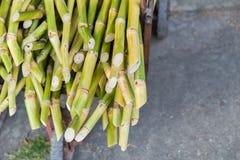 生物燃料的甘蔗蔗渣 库存图片