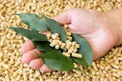 生物燃料 木药丸由被按的锯木屑和绿色叶子制成在他的手上 库存图片