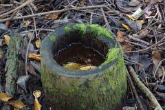 生物的水坑 免版税库存图片