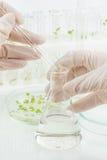 生物科学 免版税图库摄影