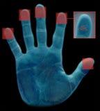 生物统计的指纹扫描程序 免版税库存照片