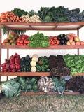生物蔬菜 免版税库存照片