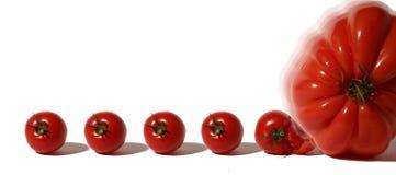 生物起源的蕃茄 库存图片