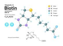 生物素结构化工分子式和模型  原子代表作为球形用颜色编码 向量例证