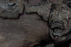生节并且咆哮木树干 木纹理 免版税库存照片