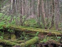 生苔下落的树森林 库存图片
