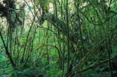 生苔云彩森林 库存照片
