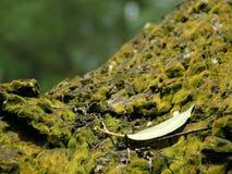 生苔分行的叶子 免版税库存照片