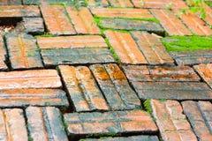 生苔和潮湿的砖 免版税库存照片