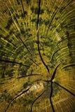 生苔和腐烂的树干 免版税库存图片