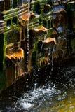 生苔喷泉 库存图片