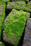 生苔在潮湿的砖 库存图片
