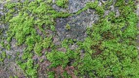 生苔地面,非常绿色 库存照片