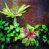 生苔墙壁的热带植物 免版税库存图片