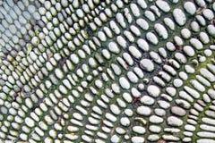 生苔小卵石 石渣表面的背景纹理 库存图片