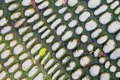 生苔小卵石 老石渣表面的背景纹理 免版税库存图片
