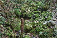 生苔小河在Glasenbach峡谷在秋天,萨尔茨堡,奥地利 免版税库存照片