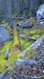 生苔岩石在森林,班夫国家公园,加拿大里 免版税库存照片