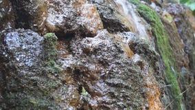 生苔岩石瀑布 股票视频