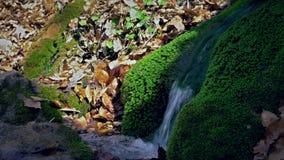 从生苔岩石的春天水流量 小春天来源围拢与岩石和叶子 软绵绵地集中 新绿色 影视素材