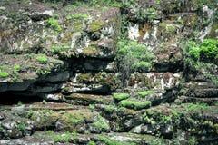 生苔岩石纹理  库存图片