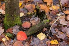 生苔树和秋天叶子 免版税库存照片