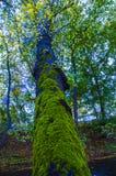 生苔树在公园 库存照片