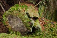 生苔树干 库存照片