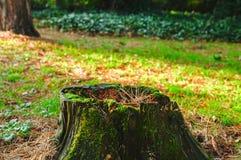 生苔树桩 免版税库存图片