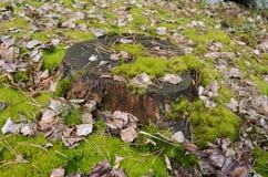 生苔树桩 库存照片