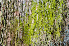 生苔树皮4 免版税库存照片