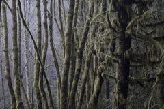 生苔树 免版税图库摄影