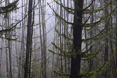 生苔树 免版税库存图片