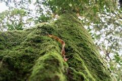 生苔森林在泰国 库存图片