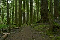 生苔森林背景 库存照片