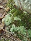 生苔楼层的森林 库存图片