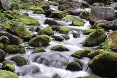 生苔的小河 免版税图库摄影
