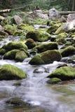 生苔的小河 库存照片