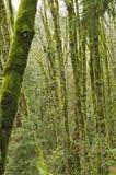 生苔的森林 库存照片