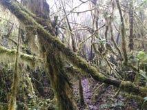 生苔的森林 免版税库存图片