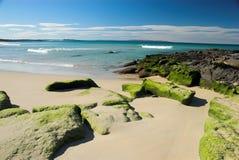 生苔的海滩 免版税库存照片